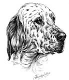 English Setter Personalised Greetings Card